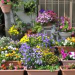 ガーデニング初心者の庭造り、何から始めよう?