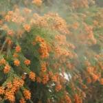 花粉症にこんなのどう?口コミの対策はニッチな需要が急増中