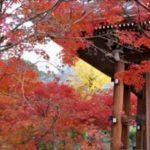京都の紅葉が綺麗なおすすめスポット!東福寺、泉湧寺その他寺院紹介