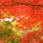 秋の京都で紅葉を楽しむ2015☆今年の紅葉の時期、見ごろはいつ?