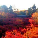秋の京都で紅葉を楽しむ2015まとめ☆今年こそ京都へ行こう!
