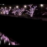 東京目黒川クリスマスイルミネーション2015!期間と混雑状況は?