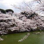 2016東京お花見スポット皇居の桜一般公開いつ?混雑情報
