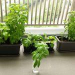 ガーデニング初心者がベランダで簡単に育てられるおすすめ植物